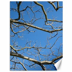 Leafless Tree Branches Against Blue Sky Canvas 36  x 48