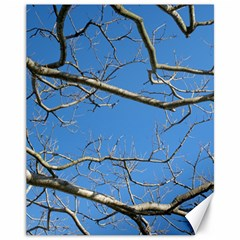 Leafless Tree Branches Against Blue Sky Canvas 11  x 14