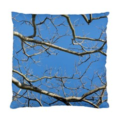Leafless Tree Branches Against Blue Sky Standard Cushion Cases (Two Sides)