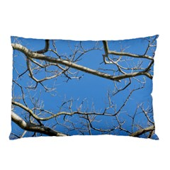 Leafless Tree Branches Against Blue Sky Pillow Cases