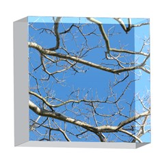 Leafless Tree Branches Against Blue Sky 5  x 5  Acrylic Photo Blocks