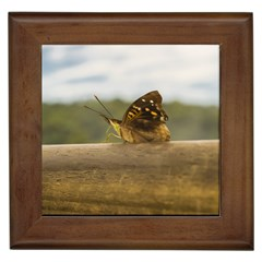 Butterfly against Blur Background at Iguazu Park Framed Tiles
