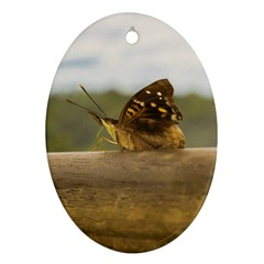 Butterfly against Blur Background at Iguazu Park Ornament (Oval)