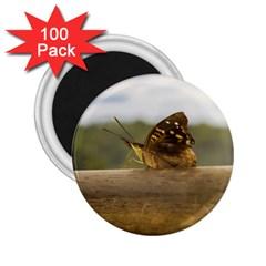 Butterfly against Blur Background at Iguazu Park 2.25  Magnets (100 pack)