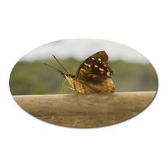 Butterfly against Blur Background at Iguazu Park Oval Magnet