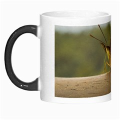 Butterfly against Blur Background at Iguazu Park Morph Mugs