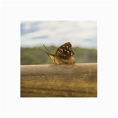 Butterfly Against Blur Background At Iguazu Park Collage 12  X 18