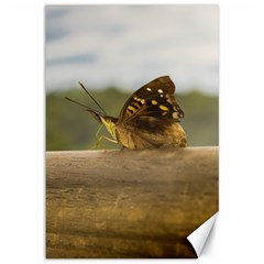 Butterfly against Blur Background at Iguazu Park Canvas 12  x 18