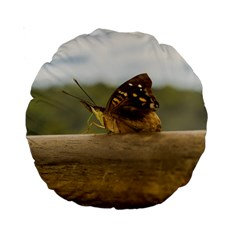 Butterfly against Blur Background at Iguazu Park Standard 15  Premium Round Cushions