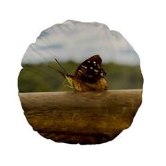 Butterfly against Blur Background at Iguazu Park Standard 15  Premium Flano Round Cushions