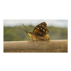 Butterfly against Blur Background at Iguazu Park Satin Shawl