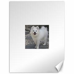 American Eskimo Dog Full Canvas 12  x 16