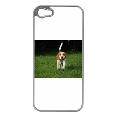 Beagle Walking Apple iPhone 5 Case (Silver)