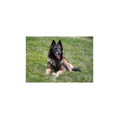 Belgian Tervuren Laying YOU ARE INVITED 3D Greeting Card (8x4)