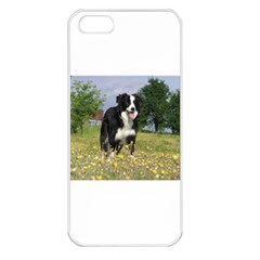 Border Collie Full 3 Apple iPhone 5 Seamless Case (White)