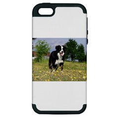 Border Collie Full 3 Apple iPhone 5 Hardshell Case (PC+Silicone)