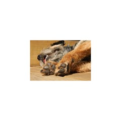 Border Terrier Sleeping YOU ARE INVITED 3D Greeting Card (8x4)