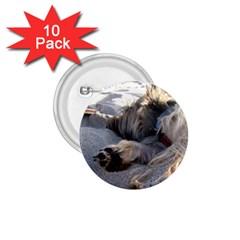 Cairn Terrier Sleeping On Beach 1.75  Buttons (10 pack)