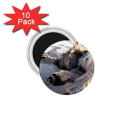 Cairn Terrier Sleeping On Beach 1.75  Magnets (10 pack)