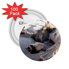 Cairn Terrier Sleeping On Beach 2.25  Buttons (100 pack)
