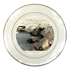 Cairn Terrier Sleeping On Beach Porcelain Plates
