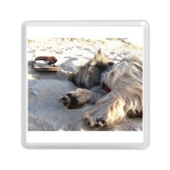 Cairn Terrier Sleeping On Beach Memory Card Reader (Square)
