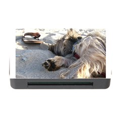 Cairn Terrier Sleeping On Beach Memory Card Reader with CF