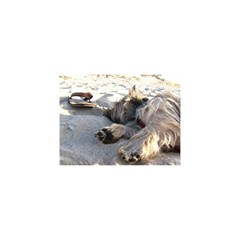 Cairn Terrier Sleeping On Beach YOU ARE INVITED 3D Greeting Card (8x4)