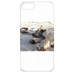 Cairn Terrier Sleeping On Beach Apple iPhone 5 Classic Hardshell Case