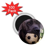 Cane Corso 1.75  Magnets (100 pack)