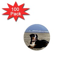 Bernese Mountain Dog Laying On Beach 1  Mini Magnets (100 pack)