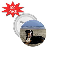 Bernese Mountain Dog Laying On Beach 1.75  Buttons (100 pack)