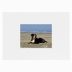 Bernese Mountain Dog Laying On Beach Large Glasses Cloth