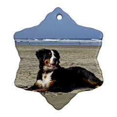 Bernese Mountain Dog Laying On Beach Snowflake Ornament (2-Side)