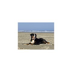 Bernese Mountain Dog Laying On Beach YOU ARE INVITED 3D Greeting Card (8x4)