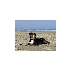 Bernese Mountain Dog Laying On Beach Birthday Cake 3D Greeting Card (7x5)