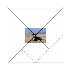 Bernese Mountain Dog Laying On Beach Acrylic Tangram Puzzle (6  x 6 )