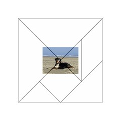 Bernese Mountain Dog Laying On Beach Acrylic Tangram Puzzle (4  x 4 )
