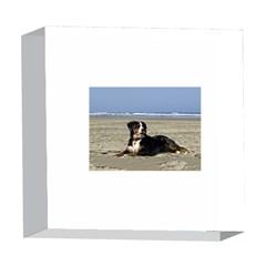 Bernese Mountain Dog Laying On Beach 5  x 5  Acrylic Photo Blocks