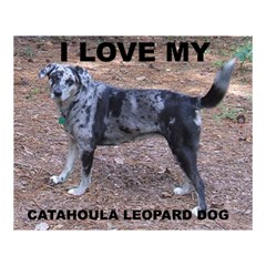 Catahoula Love With Picture Magic Photo Cubes