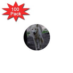 White Wolf 1  Mini Buttons (100 pack)