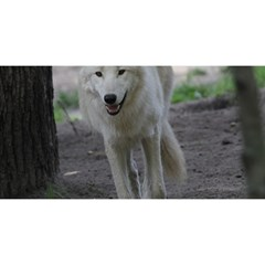 White Wolf YOU ARE INVITED 3D Greeting Card (8x4)