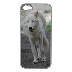 White Wolf Apple iPhone 5 Case (Silver)
