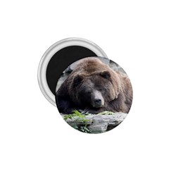 Tired Bear 1.75  Magnets