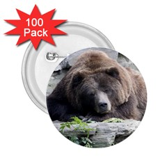 Tired Bear 2 25  Buttons (100 Pack)