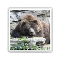 Tired Bear Memory Card Reader (Square)