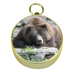 Tired Bear Gold Compasses