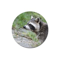 Racoon 1115 Magnet 3  (round)