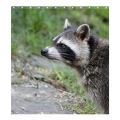 Racoon 1115 Shower Curtain 66  X 72  (large)