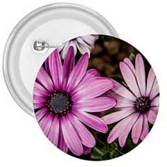 Beautiful Colourful African Daisies  3  Buttons